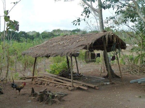 abris en bambou